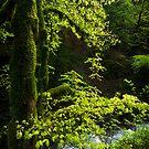 The Forest of the Grande Cascade by Mieke Boynton