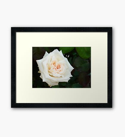 White Rose With Natural Garden Background Framed Print