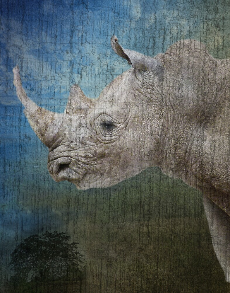 White Rhino by Linda Sparks