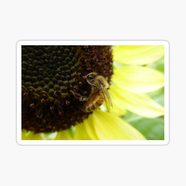 Bee on a Sunflower Sticker