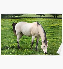 Just Equine! Poster