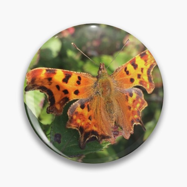 Moth/Butterfly in the Wild Pin