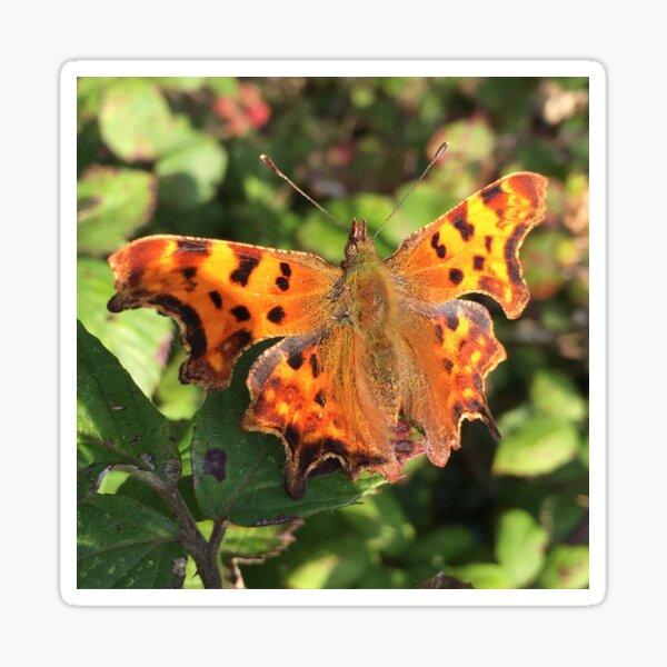 Moth/Butterfly in the Wild Sticker