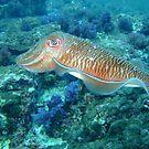 Cuttlefish by Robert Iles
