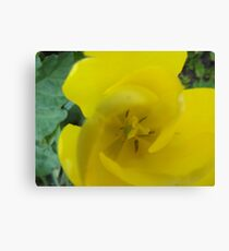 Close-Up Yellow Flower Canvas Print