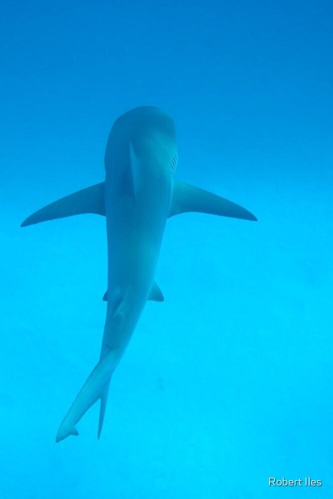 Shark 1 by 07967110495 Iles