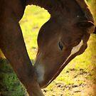 Horse Ballet by Kelly Chiara