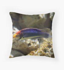 Rainbow Wrasse Throw Pillow