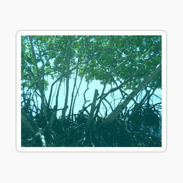 Mangrove Trees in Belize Sticker