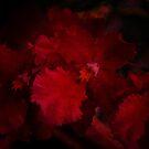 Deep Dark Orchids by Mattie Bryant