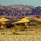Death Valley Dunes by Peter Hammer