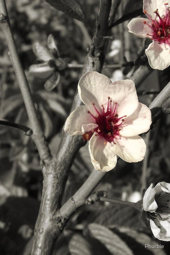 pretty pink flowers by Phurbie