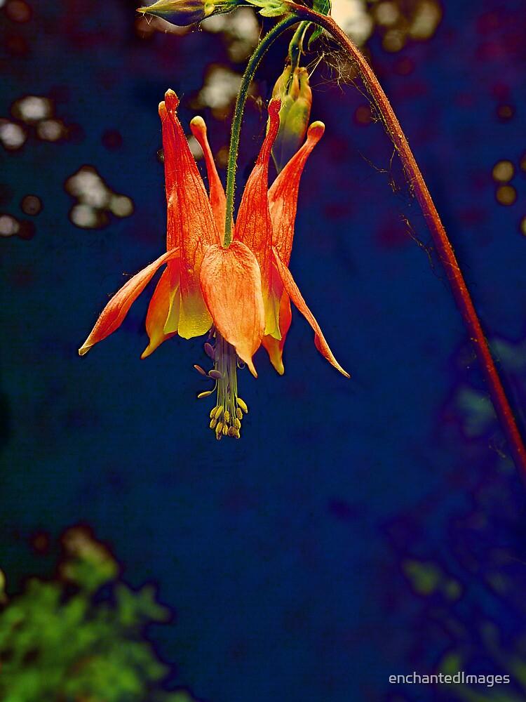 Fairy Lantern by enchantedImages