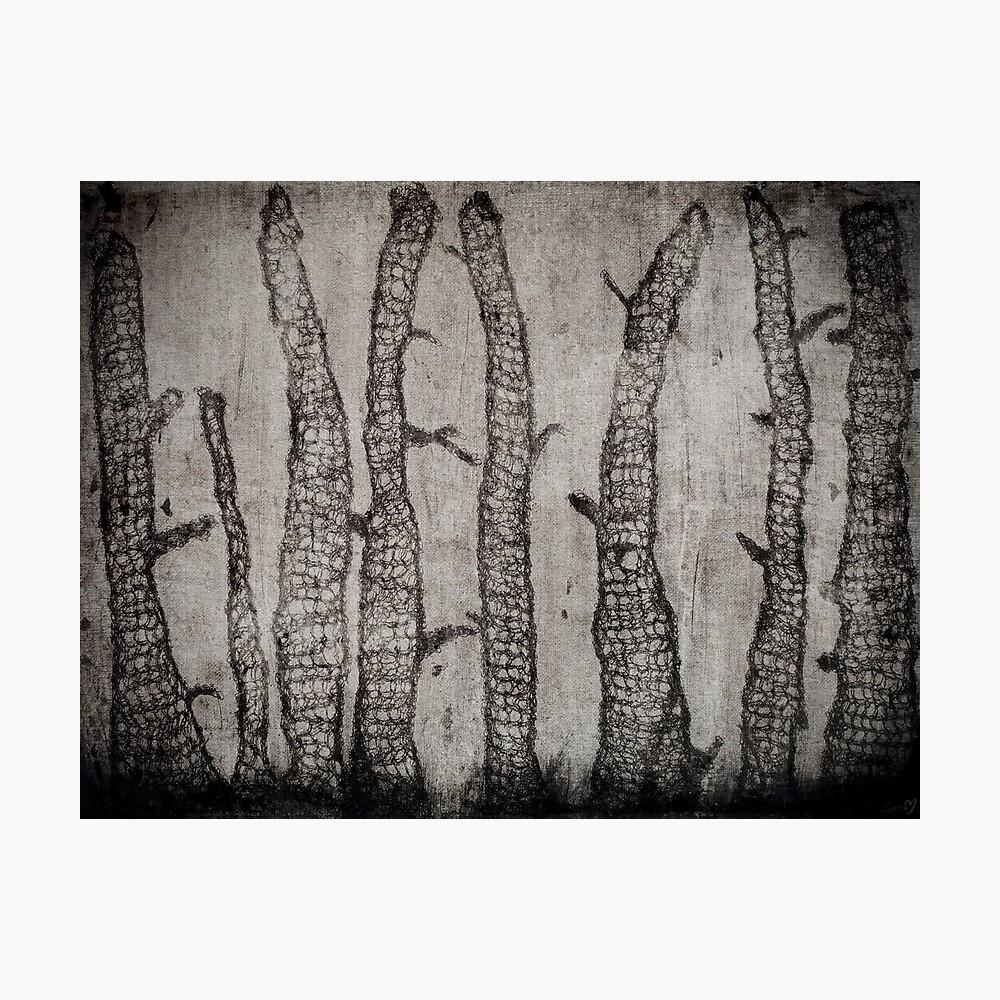Winter Wood Photographic Print
