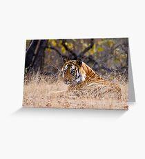 Mature male Bengal Tiger Greeting Card