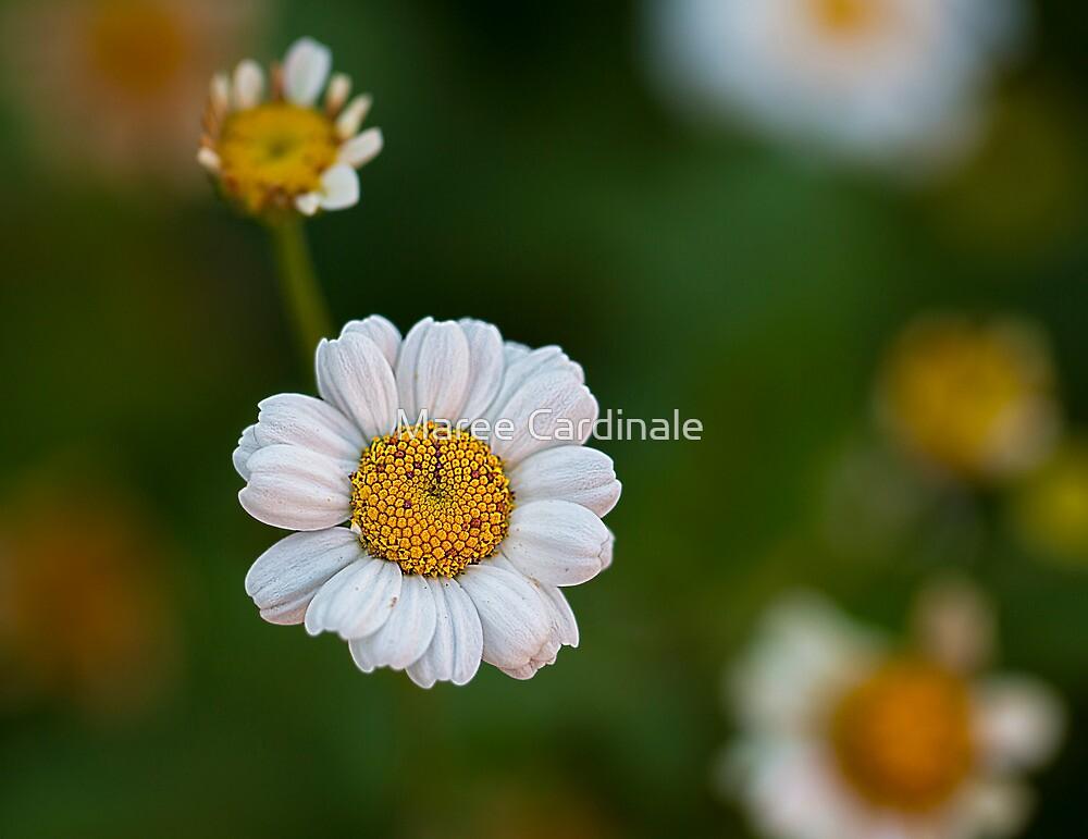 A simple pleasure by Maree Cardinale