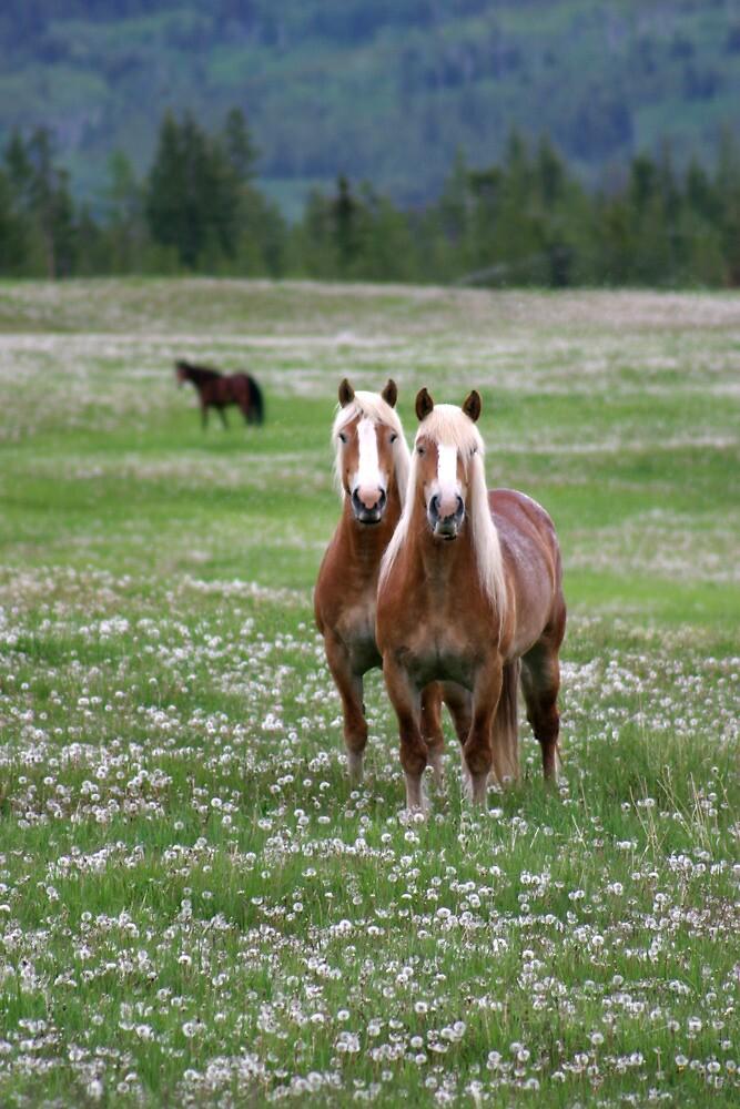 Twin Belgian Horses by blueinfinity