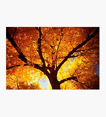 Tree Of Fire Photographic Print