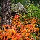 The Colorful Forest Of Fall by John  De Bord Photography