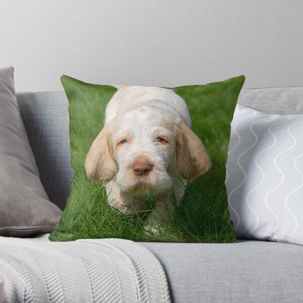 Take me home Spinone Throw Pillow