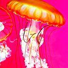 Jelly Dancer 2.0 by Stuart Baxter