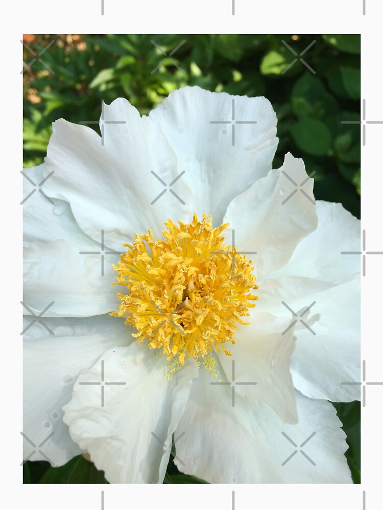Floral Gift - Chinese Peony Photography - Gardening Present by OneDayArt