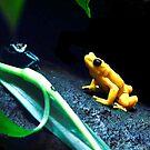 Frog talk by Stuart Baxter