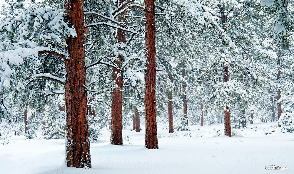 Snow in the woods by Stephen Knowles
