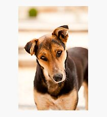 Domestic dog Photographic Print