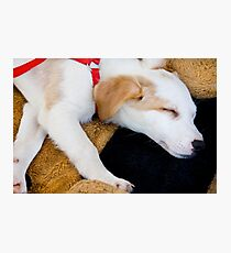 Domestic dog sleeping Photographic Print