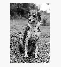 Wet domestic dog Photographic Print