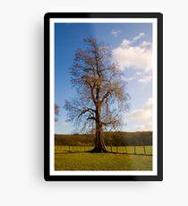 Tree (Imaginative eh :) Metal Print