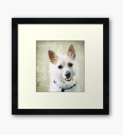 """My Name Is Teddy "" Framed Print"