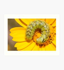 coiled caterpillar Art Print