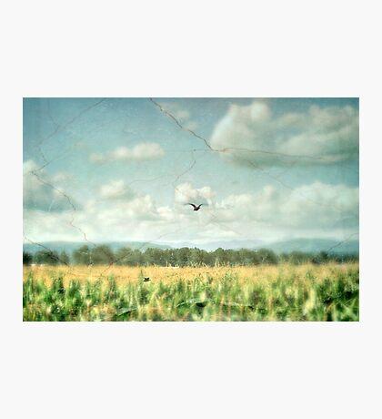 Summer Corn Photographic Print