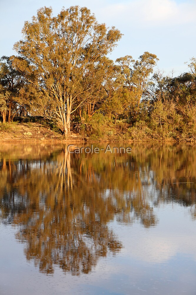 River Murray Reflections Late Afternoon by Carole-Anne