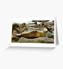 Lazy! South African Fur Seal Greeting Card