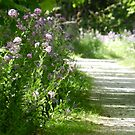 Frolicking Among The Phlox  by Heather Crough