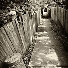 Leura Laneway by Dilshara Hill