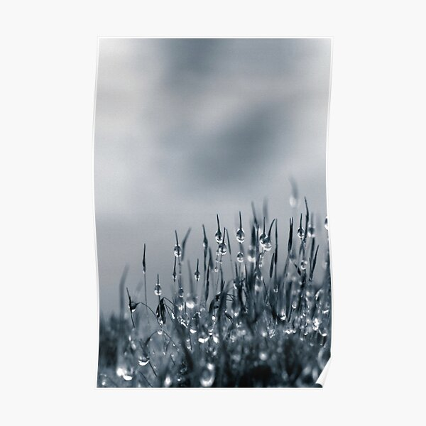 Drops of nature Poster