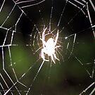 Ghost Spider! by aprilann