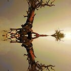 Reflection Of A Tree by CarolM