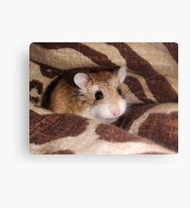 Cheese the Roborovski Hamster Canvas Print