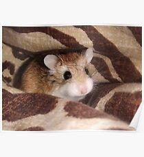 Cheese the Roborovski Hamster Poster