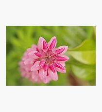 Lupin abstract Photographic Print