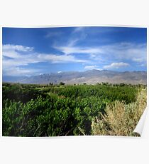 Wild Roses And Sagebrush Poster