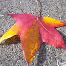 Tri-colour leaf by AmandaWitt