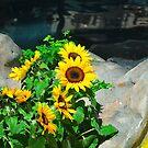 Flowers by kentuckyblueman