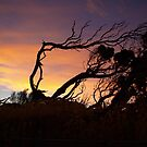 Saltbush Sunset by Imagebydg