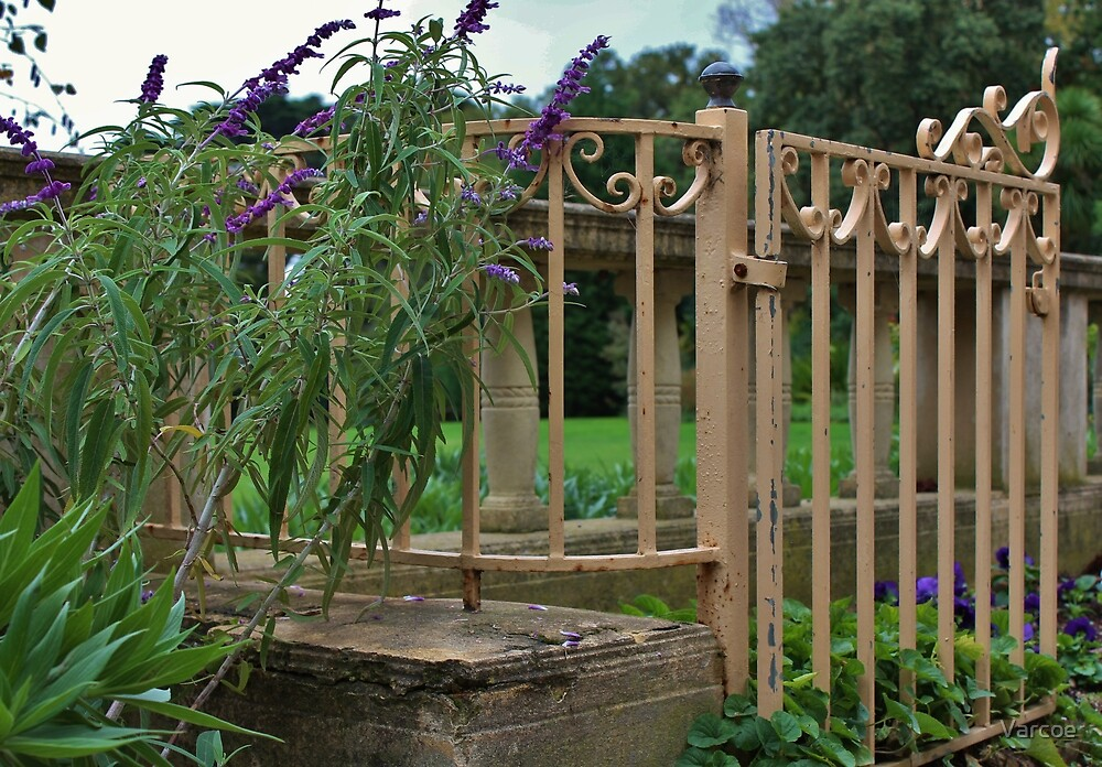 Salvia by the gate. by Jeanette Varcoe.